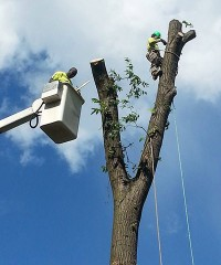 Limbs R Us Tree Service