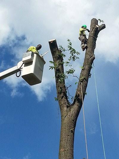 Limbs R Us Tree Service